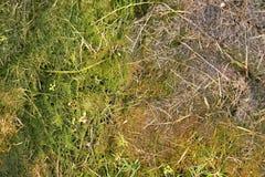 Stary gnicie zbierająca trawa w dużym zielonym odoru kopu w kącie ogród Organicznie użyźniacz Zdjęcie Royalty Free