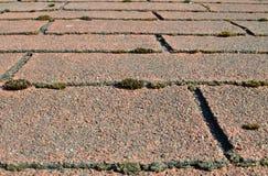 Stary gontu dach Przerastający Z mech Zdjęcie Stock