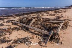 Stary homara oklepiec na książe Edward wyspy plaży Fotografia Royalty Free