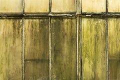 Stary i brudny półprzezroczystego bielu okno z zielonym mech obraz royalty free