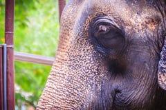 Stary i chuderlawy słoń przykuwają i spojrzenie bardzo żałosny fotografia stock