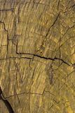 Stary i krakingowy drewno malujący kolor żółty obraz royalty free