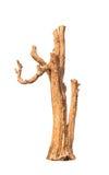 Stary i nieżywy drzewo Fotografia Stock