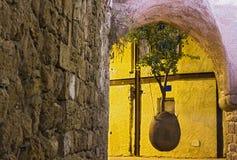 Stary Jaffa wiszący drzewo Zdjęcia Stock