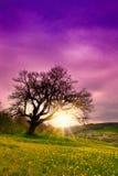 stary jeden drzewo Fotografia Royalty Free