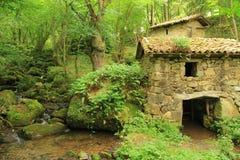 Stary kamienia młyn na rzece w zieleni i bujny lesie Obraz Stock