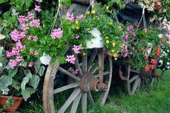 Stary kareciany koło pełno różni kwiaty Zdjęcie Royalty Free