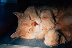 Stary kot śpi w wieczór fotografia stock