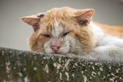 stary kot zdjęcia stock