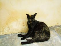 stary kot rozpamiętywał na gorącym dniu obraz stock