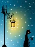 stary kota lampion Obraz Royalty Free