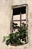 stary kratownicy stalowe okno zdjęcia royalty free