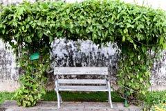 Stary krzesło z winogradem Obrazy Royalty Free