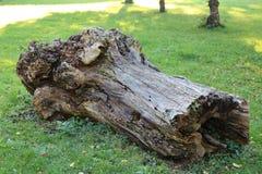 stary kufer drzewny Obrazy Royalty Free