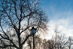 Stary lampion gałąź suszą Zdjęcie Royalty Free