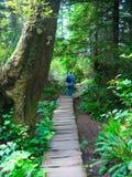 stary leśny wzrostu Zdjęcia Stock