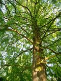 Stary liścia drzewo w parkold Zdjęcie Stock