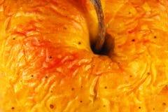 stary marszcząca jabłko skóra zamknięta stara fotografia royalty free