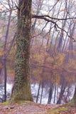 stary mech drzewo Fotografia Royalty Free