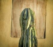 Stary Meksykański kaktus zdjęcie royalty free
