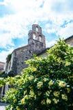 Stary miasteczko Budva, Montenegro - stary kamienny kościelny czepianie forteca Budva Adriatycki morze Kwiaty i palmy zdjęcia royalty free