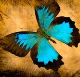 stary motyli grunge Fotografia Royalty Free
