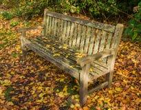 stary na ławce parku Obraz Royalty Free