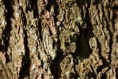 Stary naturalny drewniany podławy tła zakończenie up, stary drewniany tło, tekstura korowaty drewniany use jako naturalny tło Obrazy Stock