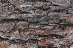 Stary naturalny drewniany podławy tła zakończenie up, stary drewniany tło, tekstura korowaty drewniany use jako naturalny tło Fotografia Royalty Free
