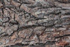 Stary naturalny drewniany podławy tła zakończenie up, stary drewniany tło, tekstura korowaty drewniany use jako naturalny tło Obraz Royalty Free
