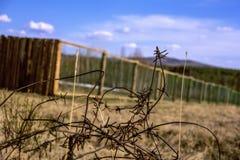 Stary, ośniedziały drut kolczasty chujący w trawie, Ośniedziały stary drut kolczasty z tłem Fotografia Stock