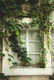 Stary okno przerastający z zielonym bluszczem obrazy royalty free