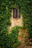 Stary okno z ścianą pełno winogrady T obrazy royalty free