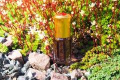 Stary olej od agarwood drzewa Indianin koncentrujący pachnidło Obraz Royalty Free