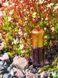 Stary olej od agarwood drzewa Indianin koncentrujący pachnidło Zdjęcie Stock