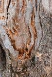 stary ostry tekstury drewna Drewniany Tło Drzewo pęknięcie egzot Natura obrazy royalty free