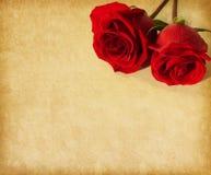 Stary papier z dwa zmrokiem - czerwone róże Obrazy Stock