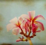 Stary papierowy tło z kwiatem Obraz Royalty Free