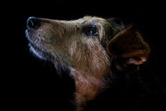 Stary pies obraz stock