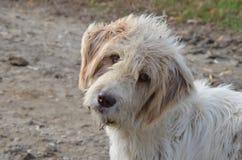 stary pies Zdjęcia Royalty Free