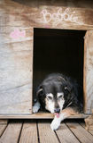 Stary pies w psiarni Fotografia Royalty Free