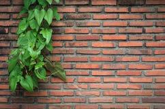 Stary pomarańczowy ściana z cegieł. Obraz Stock