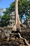 stary prohm target3029_1_ ta drzewa ściany wat fotografia royalty free