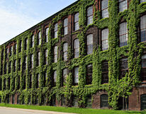 Stary przemysłowy budynek zakrywający w bluszczu Zdjęcia Royalty Free