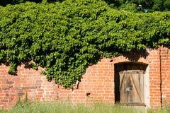 Stary przerastający ściana z cegieł obraz royalty free