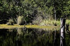 Stary przerastający jezioro zdjęcia stock