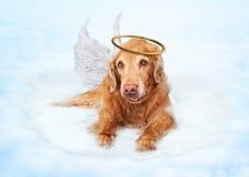 Stary Psi anioł na chmurze w niebie Fotografia Royalty Free