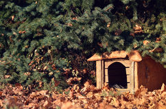 Stary psi dom otaczający kolorem żółtym opuszcza w lesie Obrazy Stock