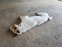 Stary psi odpoczywać Zdjęcia Royalty Free