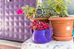 stary purpurowy teapot, garnek z kwiatami przed kamienną ścianą zdjęcie stock